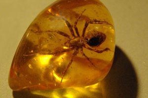 Đá hổ phách-amber là gì? Đeo hổ phách có tác dụng gì?